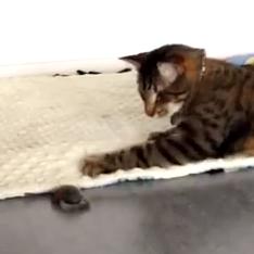 Oskar leker