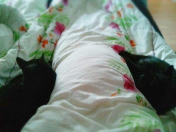 Kattmorgon